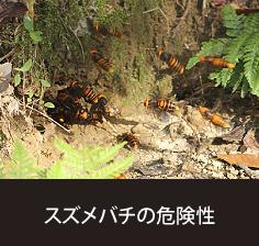 スズメバチの危険性